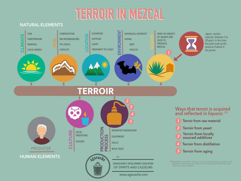 5 Ways in which terroir is acquired and reflected in mezcal.